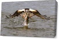 Another Piece Of Meat As Canvas