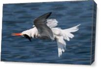 Wrong Tern As Canvas