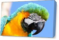 Macaw As Canvas
