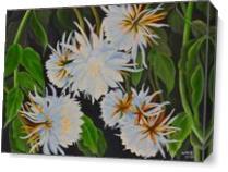 Brahmakamala1 As Canvas