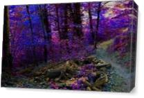 Path In The Forest - Gallery Wrap Plus