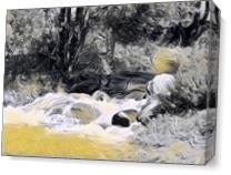 Creek As Canvas