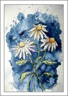 Daisies Flower Art Print - No-Wrap