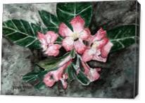 Desert Rose Flower Painting - Gallery Wrap