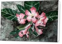 Desert Rose Flower Painting - Standard Wrap