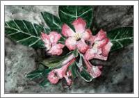 Desert Rose Flower Painting - No-Wrap