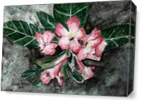Desert Rose Flower Painting As Canvas