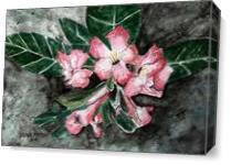 Desert Rose Flower Painting - Gallery Wrap Plus