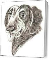 Labrador Dog As Canvas