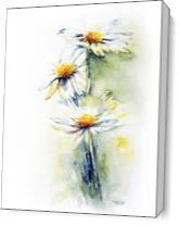 Daisy Chain As Canvas