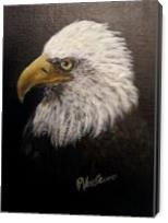 Bald Eagle - Gallery Wrap