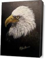 Bald Eagle - Gallery Wrap Plus