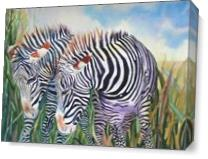 Zebra Zebra As Canvas