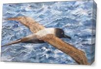 Albatross As Canvas