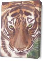Big Cat Rescue Tiger, China Doll As Canvas