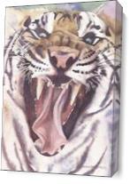 Big Cat Rescue Tiger As Canvas