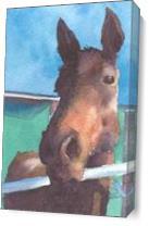 Horse As Canvas
