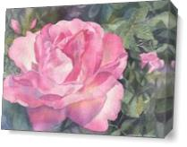 Pink Rose As Canvas