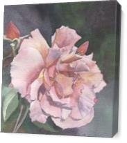 San Francisco Rose As Canvas