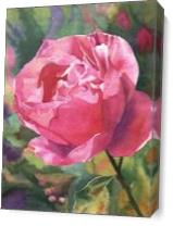 Tiburon Rose As Canvas