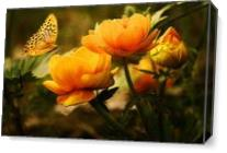 Orange Butterfly Hovering Over Blooming Flowers As Canvas