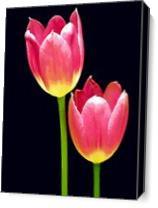 Floral 2 Pastel 18X24 As Canvas