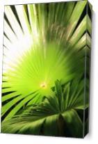 Palm Fronds In Sunlight St John Virgin Islands National Park Photograph By Roupen Baker As Canvas