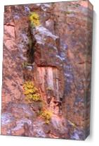 Yellow Fall Foliage Clings To The Canyon Wall Photograph Grand Canyon National Park Arizona By Roupen Baker As Canvas