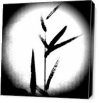 Bamboo at Full Moon As Canvas