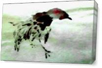 Korean Bird As Canvas