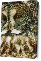 The Glaucus Owl As Canvas