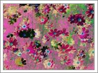 Cosmos Garden Flowers - No-Wrap