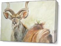 Kudu As Canvas