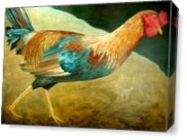 Running Rooster As Canvas