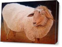 Shaggy Sheep - Gallery Wrap Plus