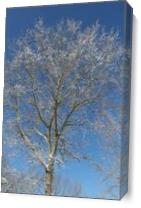 Shimmering Tree As Canvas