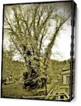 Eerie Tree As Canvas