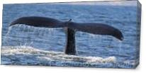 Whale Tail As Canvas