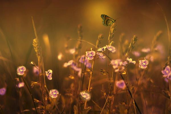 Evening Magic Butterfly By David Dehner