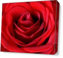 Roses For Life 1 As Canvas