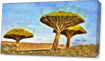 Dragonblood Trees As Canvas