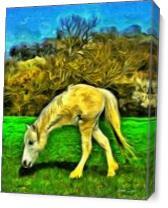 Monohorse As Canvas