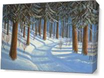 Tahoe Forest In Winter As Canvas