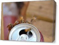 Bee's In Flight As Canvas