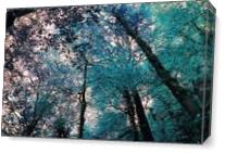Trees As Canvas