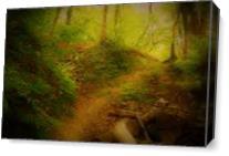 Woodland As Canvas