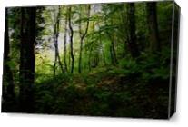 Path As Canvas