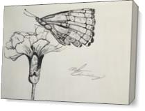 Butterfly Days